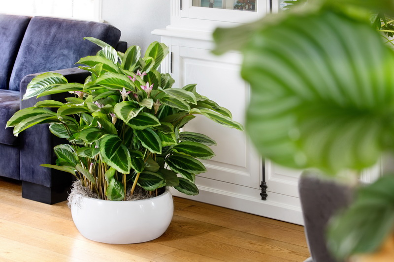 pflanzen f r menschen. Black Bedroom Furniture Sets. Home Design Ideas