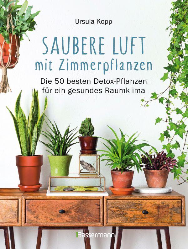 saubere luft mit zimmerpflanzen die 50 besten detox pflanzen f r ein gesundes raumklima. Black Bedroom Furniture Sets. Home Design Ideas