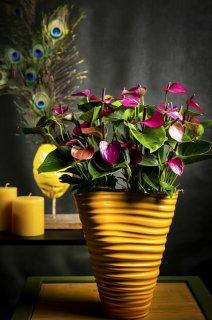 Pinkfarbene Anthurien in gelben Blumentöpfen