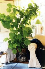 gesund leben schluss mit trockener raumluft pflanzen f r menschen. Black Bedroom Furniture Sets. Home Design Ideas