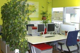 Grüner Raumteiler