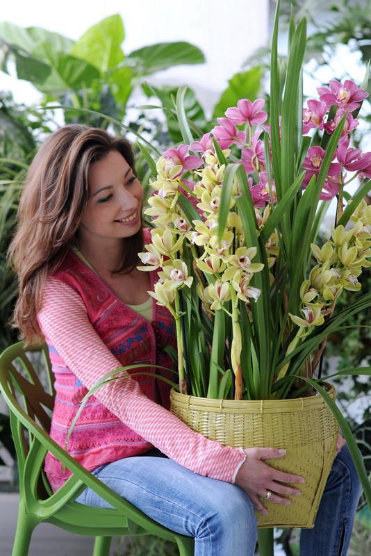mehrere orchideen in eine schale pflanzen