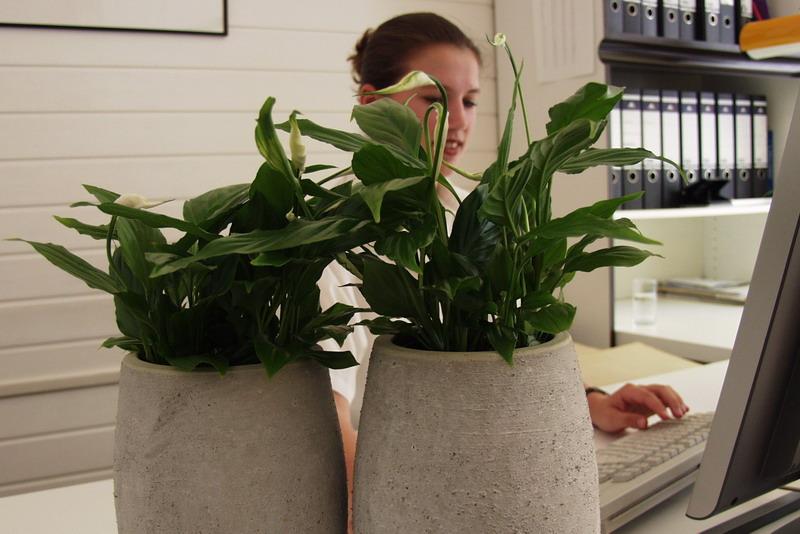 inspiration und sinnlichkeit im b ro pflanzen f r menschen. Black Bedroom Furniture Sets. Home Design Ideas