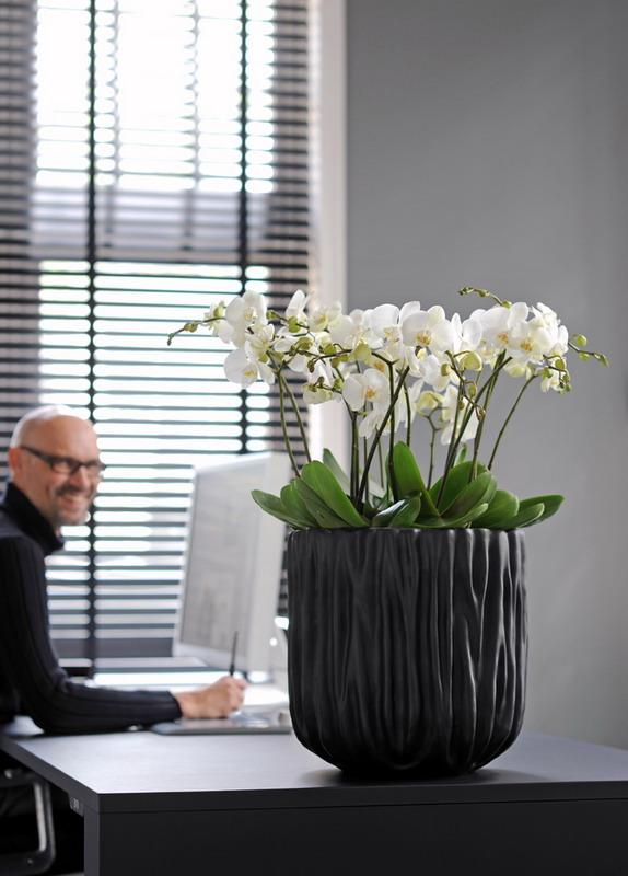 f r jeden mitarbeiter eine pflanze pflanzen f r menschen. Black Bedroom Furniture Sets. Home Design Ideas