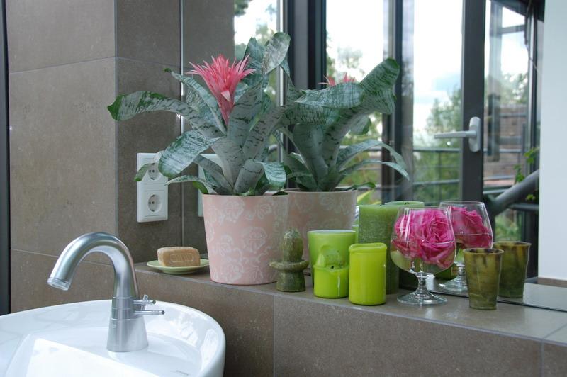 bromelien pflegeleicht und exotisch pflanzen f r menschen. Black Bedroom Furniture Sets. Home Design Ideas