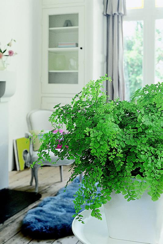pflanzen f r menschen part 9. Black Bedroom Furniture Sets. Home Design Ideas