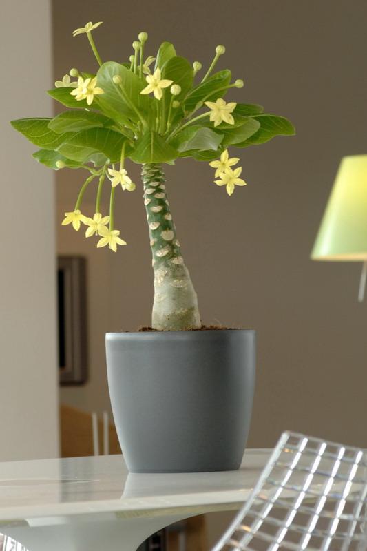 Ausgefallene zimmerpflanzen pflanzen f r nassen boden for Ausgefallene zimmerpflanzen