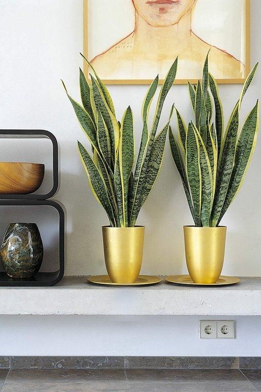 vorsorge mit gr n arbeitspl tze mit pflanzen bedarfsgerecht gestalten pflanzen f r menschen. Black Bedroom Furniture Sets. Home Design Ideas
