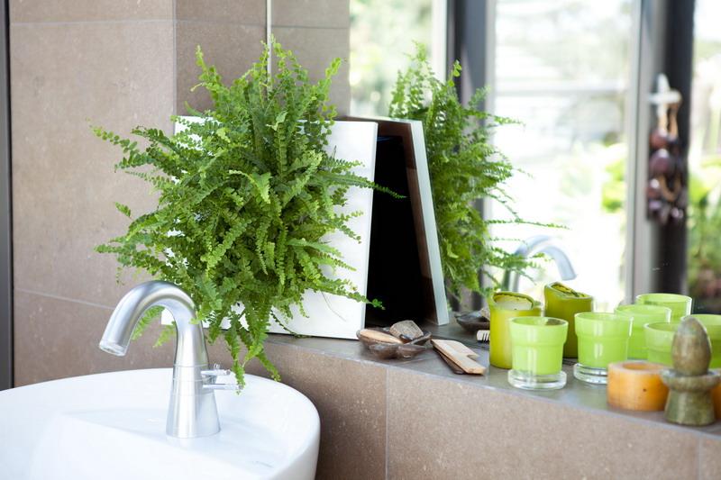 pflegetipps hangende zimmerpflanzen raume einfach begrunen. Black Bedroom Furniture Sets. Home Design Ideas